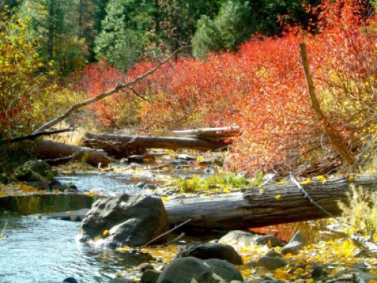 Blewett Pass fall color